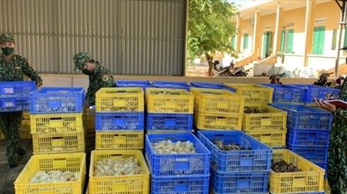 Bắt vụ vận chuyển trái phép 28 nghìn con gà giống từ Trung Quốc vào nội địa