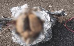 Phát hiện 'bộ não' bí ẩn dạt bờ biển ở Mỹ