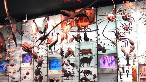 Bảo tàng trong thời đại số: 'Hậu bảo tàng'