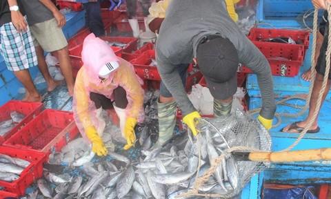 Tàu tấp nập vào bờ, ngư dân hối hả bán cá tránh bão