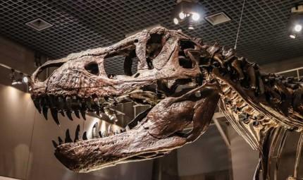 Bán đấu giá bộ xương khủng long lớn nhất thế giới