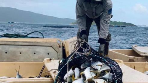 Sản phẩm từ biển: Nguồn thực phẩm an toàn, giàu dinh dưỡng