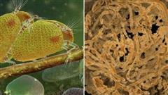 39 sinh vật cổ đại 'hóa đá' trong ngọc khi… đang làm 'chuyện ấy'