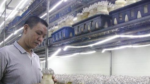 Đưa nấm Việt tiến ra thị trường