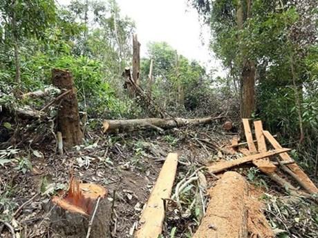 Thủ đoạn của các đối tượng phá rừng ở Gia Lai ngày càng tinh vi