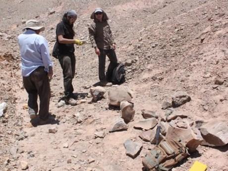 Chile phát hiện hóa thạch bò sát biển khổng lồ thuộc kỷ Jura