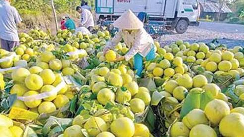 Hoa quả Việt Nam vào thị trường Trung Quốc: Nhiều tiềm năng còn bỏ ngỏ