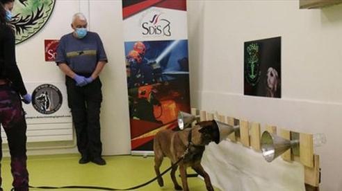 Phần Lan sử dụng chó phát hiện virus SARS-CoV-2 tại sân bay Helsinki
