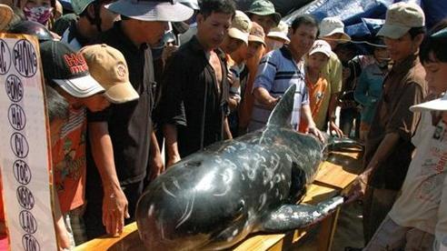 Nghi thức chôn cất cá Ông của cư dân miền biển Quảng Nam
