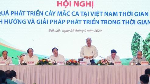 Thủ tướng: 'Phải trả lời cho được diện tích trồng cây mắc ca bao nhiêu là phù hợp'
