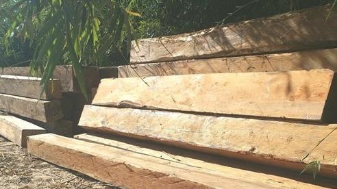 Sa thải Giám đốc và 2 cán bộ lơ là bảo vệ rừng ở Kon Tum