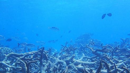 Rạn san hô 500 nghìn năm tuổi Great Barrier đã mất gần một nửa số san hô so với những năm 1990