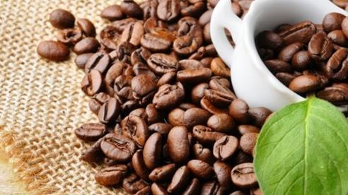 Giá cà phê ngày 25/10: Tăng nhẹ so với đầu tuần