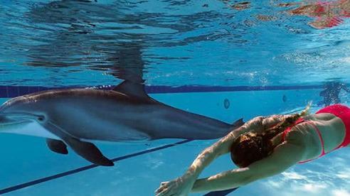 Mỹ chế tạo cá heo robot thay thế động vậtbị nuôi nhốt ở công viên giải trí
