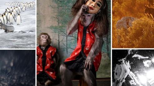 Ảnh 'Chú khỉ đeo mặt nạ người' nhận giải Nhiếp ảnh gia thiên nhiên hoang dã của năm tại Châu Âu