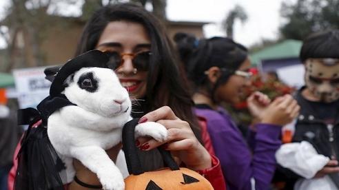 Người Mỹ đổ xô mua trang phục Halloween cho thú cưng