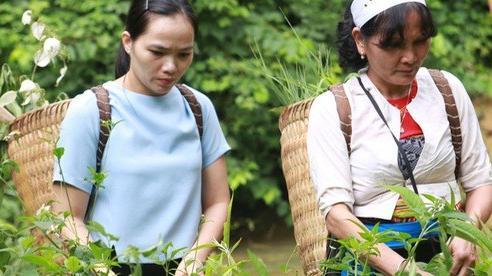 Lương y Nguyễn Thị Hiền – 'Kho thuốc sống' của người Việt