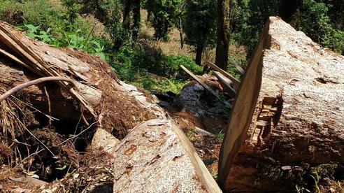 Yên Bái: Khu bảo tồn loài sinh vật cảnh 'chảy máu', gỗ quý bị chặt hạ, xẻ hộp la liệt