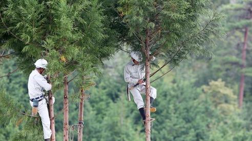 Phá rừng và công cuộc 'sửa sai' của Nhật Bản