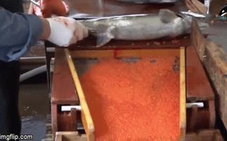 Video: Đã mắt màn lấy trứng cá hồi tươi ngon, quý giá