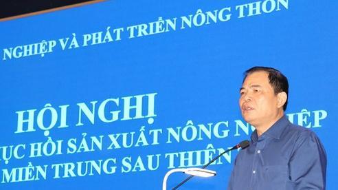 Khôi phục sản xuất nông nghiệp khu vực miền Trung