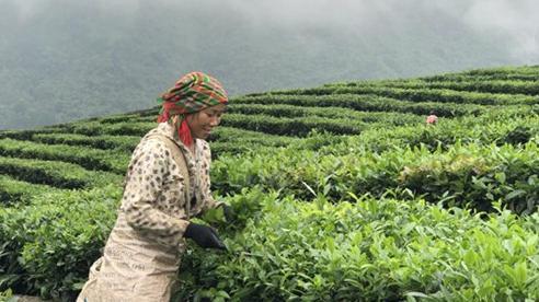 Lai Châu: Giảm hơn 17.000 hộ nghèo