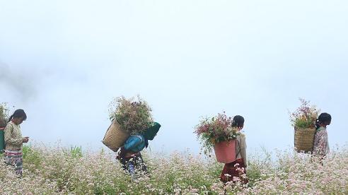 Hà Giang với sắc tím lãng mạn