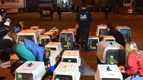 Giải cứu 45 chú chó ở Trung Quốc