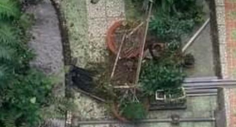 Cựu sinh viên đại học rơi từ lầu 6 xuống sân trường tử vong