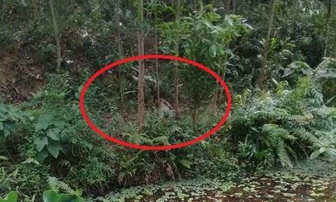 Phát hiện 2 người chết trong rừng