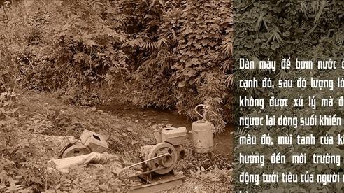Thái Nguyên: 'Vàng tặc' hoành hành ở xã Cây Thị