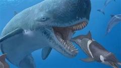 Cá voi cổ đại Melvillei, cơn ác mộng của siêu cá mập Megalodon