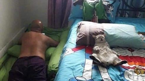 Con trai nuôi mèo, bố dọa 'đá bay' nhưng vài tháng sau lại bắt gặp cảnh tưởng không ngờ