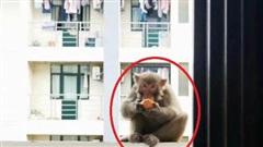 Quay lại KTX sau gần nửa năm nghỉ phòng dịch, sinh viên hốt hoảng thấy khỉ nhưng thông báo của trường mới gây cười: Các em đánh không lại đâu!
