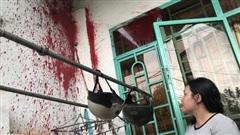 Tố cáo sai phạm, một phụ nữ bị ném sơn trộn mắm tôm vào nhà