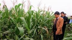 Nông sản Hồng Hà Sơn La (HSL): Đổi tên công ty, đặt mục tiêu lãi 15 tỷ đồng, giảm 68% so với 2019