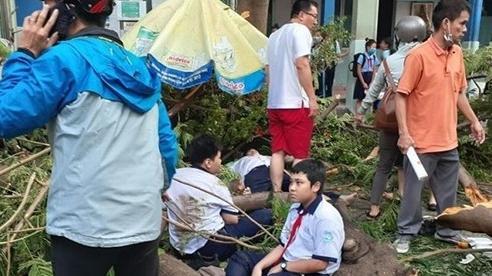 Các trường phải cắt tỉa cây sau sự việc cây phượng đổ đè 18 học sinh
