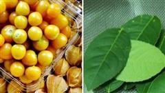 Những loại cây quả mọc dại ở Việt Nam 'bán không ai mua' nhưng sang nước ngoài lại có giá cực đắt, còn được săn lùng đến 'cháy hàng'