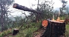 'Cơn bão' phá rừng càn quét dãy Langbiang