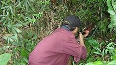 Điện Biên: Bố bắn chết con vì tưởng nhầm là thú