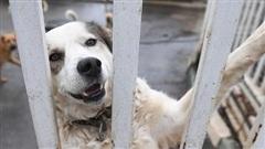 Những chú chó có thể ngửi thấy 'mùi' bệnh nhân mắc Covid-19