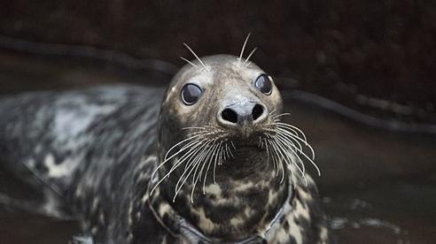 Video: Giải cứu những chú hải cẩu bị mắc kẹt rác thải nhựa