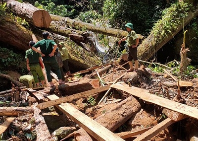 Khởi tố vụ án hình sự phá rừng tự nhiên tại Nghệ An