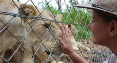 Nhân viên sở thú bị sư tử tấn công đến nguy kịch