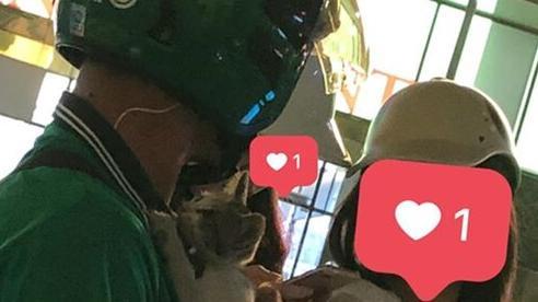 Chàng trai chạy Grab ôm bé mèo con bị bỏ rơi đi khắp phố tìm người nhận nuôi khiến nhiều người cảm động