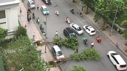 Hà Nội: Cây xanh bật gốc đè trúng ô tô đang chạy trên đường giữa cơn giông bất chợt