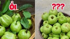 Tưởng là ổi nhưng hoá ra loại trái cây này đã khiến biết bao người nhầm lẫn, còn được xem là 'cụ tổ' của các loại quả chua