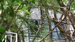Ngay Hà Nội có một căn nhà cheo leo trên đỉnh ngọn cây của người họa sĩ 61 tuổi: Gần 20 năm trồng và đợi cây lớn
