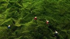 Bộ ảnh đồng cỏ Việt Nam 'lượn sóng' đang gây bão mạng quốc tế, nhưng cả ngàn người nước ngoài lại bị nhầm lẫn ở một điểm này