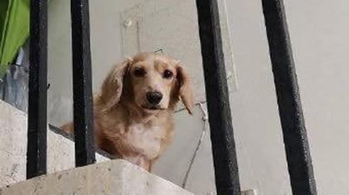 Chàng shipper và chú chó đi lạc hội ngộ sau 5 năm, hành động của chủ mới khiến ai cũng bất ngờ